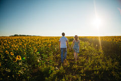 Romantic couple  go and holding hands on background summer meadow sunflower sunset Stock Image