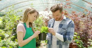 Romantic couple with green plant in hothouse stock video