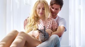 Romantic couple in night wear sit on floor with domestic rabbit on her lap. Near big curtained window. young husband and wife spend leisure time with their pet stock video footage