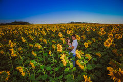 Romantic couple standing and kissing on background summer  field sunflower sunset Stock Photography
