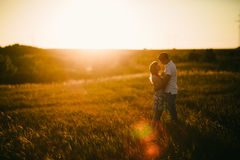 Romantic couple standing and kissing on background summer  field sunflower sunset Stock Image