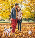 Romantic couple walking outdoors in autumn park with dogs Stock Photo
