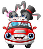 Romantic couples cartoon rabbit driving a car. Illustration of Romantic couples cartoon rabbit driving a car Royalty Free Stock Photos