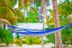 Romantic cozy hammock under coconut palm tree at tropical paradise in bright sunny summer day Stock Photography