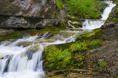 Romantic creek in the wild ravine Royalty Free Stock Image