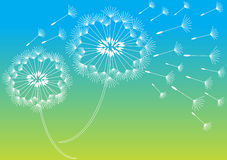 Romantic dandelions background Royalty Free Stock Images