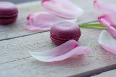 Romantic delicate composition with pink flowers and macaroon cakes. stock images