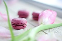 Romantic delicate composition with pink flowers and macaroon cakes. royalty free stock photo