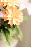 Romantic dreamy and soft focus of flower Royalty Free Stock Photos