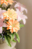 Romantic dreamy and soft focus of flower Royalty Free Stock Images