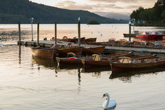 Romantic dusk scene of a beautiful mute swan and moored boats in Lake Windermere Royalty Free Stock Image