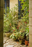 Romantic English cottage garden. With pots in plants Stock Images