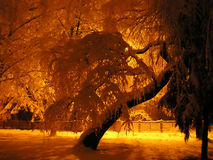 Romantic evening Royalty Free Stock Photo