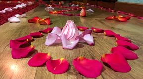PINK AND RED ROSE PETALS ON FLOOR. Romantic evening with rose petals arranged on floor royalty free stock image