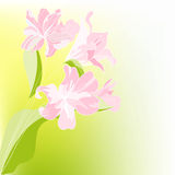 Romantic floral background. Universal template for greeting card, web page, background Stock Photography