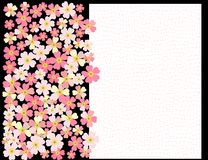 A romantic floral background. Flower. Japanese daisies. A romantic floral background. Flower. Tender Japanese daisies delicate color Stock Images