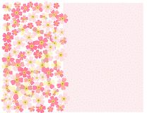 A romantic floral background. Flower. Japanese daisies. A romantic floral background. Flower. Tender Japanese daisies delicate color Stock Photos