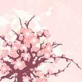 Romantic floral background with sakura branch Stock Photos