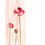 Romantic flower background Royalty Free Stock Image