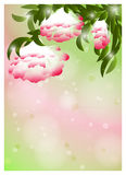 Romantic Flower Background. Romantic Green And Pink Flower Background Stock Illustration