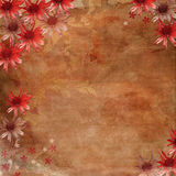 Romantic Flower Background Royalty Free Stock Images