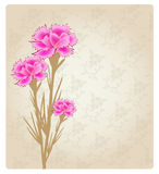 Romantic Flower Background banner Royalty Free Stock Photography