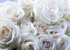 Romantic flowers Stock Photos