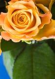Romantic flowers Royalty Free Stock Photo