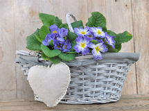 Romantic flowers basket Stock Photography