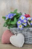Romantic flowers basket Royalty Free Stock Photography