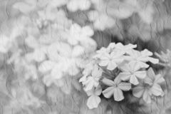 Romantic flowers in textured background.  royalty free stock photo