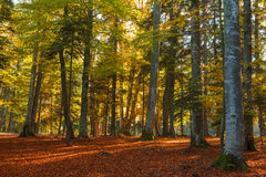 Romantic forest during autumn Royalty Free Stock Photography