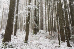 Romantic forest during winter Stock Photos