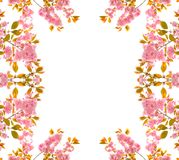 Romantic framework. Made from pink cherry flowers Royalty Free Stock Image