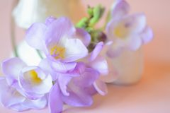 Romantic freesias Royalty Free Stock Photos