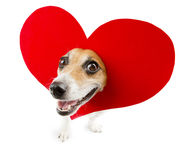 Romantic funny relationship Stock Image