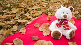 Romantic gift for your beloved girl in the form of a teddy bear Royalty Free Stock Image