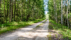 Romantic gravel road in green tree forest. With sunlight and shadows Royalty Free Stock Images