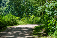 Romantic gravel road in green tree forest. With sunlight and shadows Stock Photos