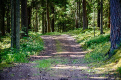 Romantic gravel road in green tree forest. With sunlight and shadows Royalty Free Stock Photos