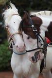 Romantic Horse Couple Royalty Free Stock Image