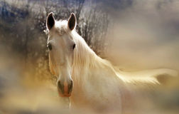 Romantic horse. Romantic white mare worth pondering Royalty Free Stock Images