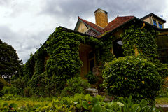 Romantic house exterior covered with vine. Stock Photography