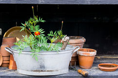 Romantic idyllic plant table in the garden with old retro flower pot pots, garden tools and plants Stock Image