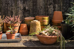 Romantic idyllic plant table in the garden with old retro flower pot pots, garden tools and plants Stock Images