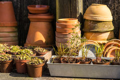 Romantic idyllic plant table in the garden with old retro flower pot pots, garden tools and plants Stock Photography