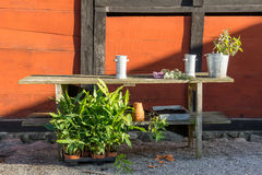 Romantic idyllic plant table in the garden with old retro flower pot pots, tools and plants Stock Photography