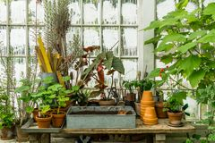 Romantic idyllic plant table in the green house with old retro terracotta flower pots. Romantic idyllic plant table in the green house with old retro flower pot Royalty Free Stock Photo