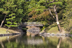 Romantic Japanese garden with bridge pine trees Stock Photography