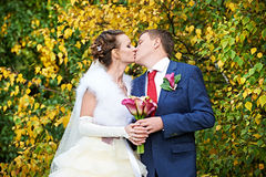 Romantic kiss bride and groom at autumn. Romantic kiss bride and groom near foliage on wedding walk Stock Image